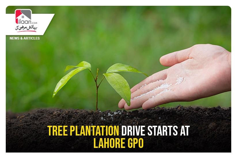 Tree Plantation drive starts at Lahore GPO