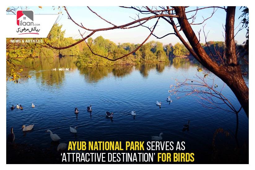 Ayub National Park serves as 'attractive destination' for birds