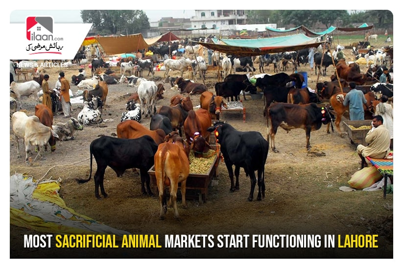 Most sacrificial animal markets start functioning in Lahore