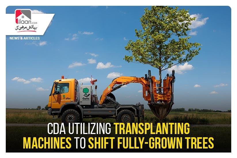CDA utilizing transplanting machines to shift fully-grown trees