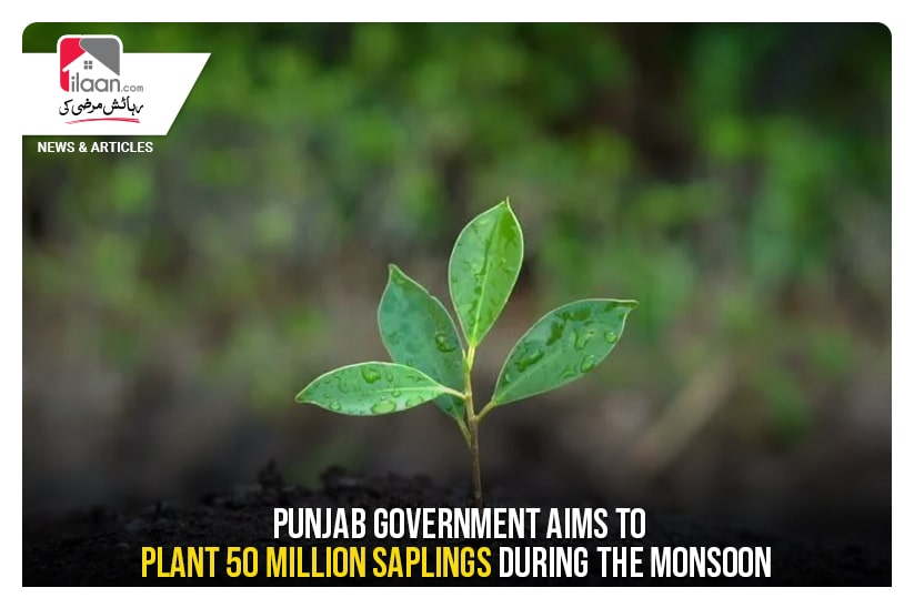 Punjab government aims to plant 50 million saplings during the monsoon
