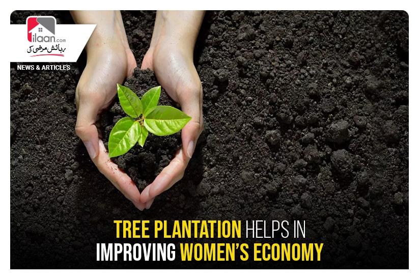 Tree plantation helps in improving women's economy