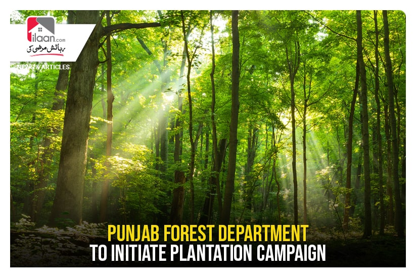 Punjab Forest Department to initiate plantation campaign