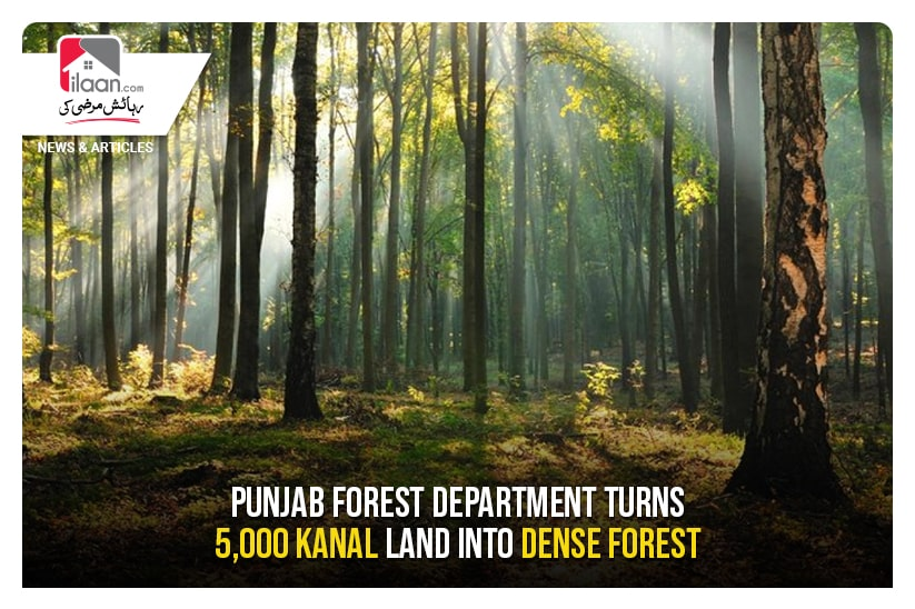 Punjab Forest Department turns 5,000 kanal land into dense forest