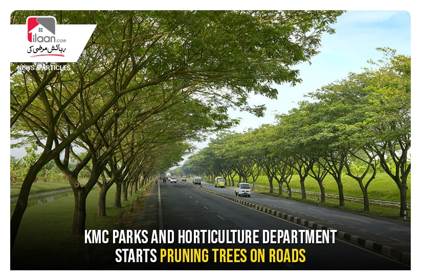 KMC parks and horticulture department starts pruning trees on roads