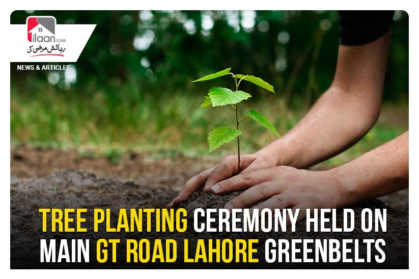 Tree planting ceremony held on main GT Road Lahore greenbelts