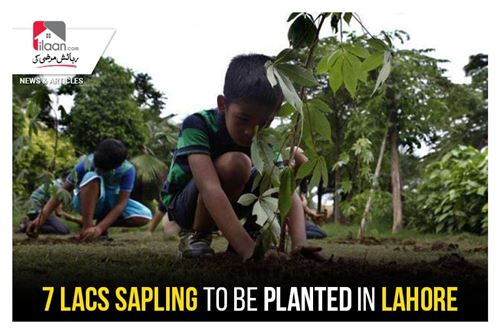 7 Lacs sapling to be planted in Lahore