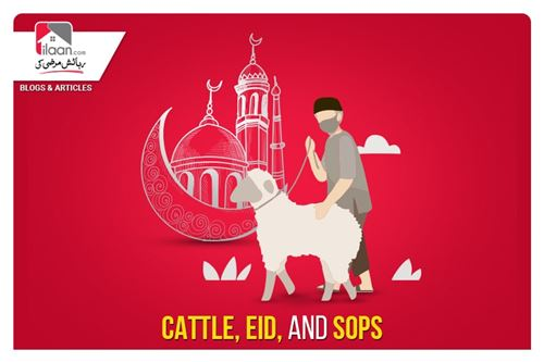Cattle, Eid, and SOPs