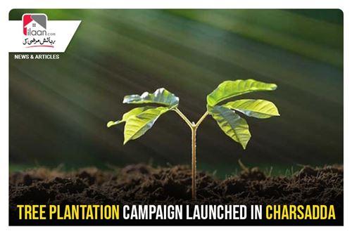 Tree plantation launched in Charsadda