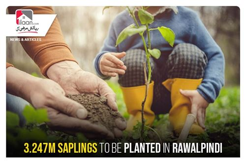 3.247m saplings to be planted in Rawalpindi